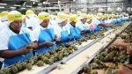Los retos que debe afrontar el sector agroexportador peruano para consolidarse - Noticias de jose carlos hernani