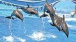 Aventura en el agua: los mejores parques acuáticos de Florida - Noticias de hilton garden inn