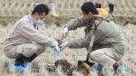 Granja en antigua zona restringida de Fukushima comienza a plantar arroz - Noticias de central nuclear de fukushima