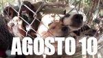 Artistas de EE.UU. competirán en carrera benéfica para albergue de animales - Noticias de jaime serna