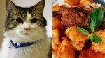 Platillos a base de gato: la polémica tradición cañetana que hoy está en el ojo de la tormenta - Noticias de prevención de la crueldad contra los animales