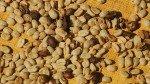 Exportaciones de café crecieron 12,66% en la última cosecha - Noticias de anner roman neira