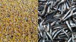 La anchoveta y la quinua: dos armas contra la desnutrición - Noticias de quinua hambre mundial