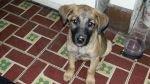 Unos 100 perros esperan ser adoptados: conoce dónde los puedes encontrar - Noticias de albergues para perros