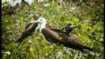 Conoce las aves que habitan en los manglares de Tumbes [FOTOS] - Noticias de turismo en tumbes