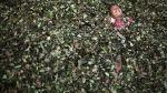 Algunas de las mejores fotos de Rodrigo Abd, el ganador del Pulitzer 2013 que se mudó al Perú [FOTOS] - Noticias de rodrigo abd