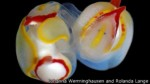 La babosa hermafrodita que apuñala a su pareja cuando copula - Noticias de hermafroditas