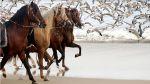La fotógrafa que lleva por el mundo a los caballos peruanos de paso [FOTOS] - Noticias de ana maria garcia montero