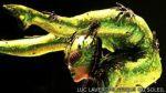 ¿Cómo se volvió el Cirque du Soleil un negocio millonario? - Noticias de daniel bailey