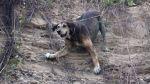 Perro rescatado en la Costa Verde está saludable y espera ser adoptado - Noticias de olger benavides