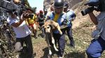 ¿Por qué un perro mestizo no puede ser policía? - Noticias de olger benavides