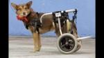 Perros pobres se atienden gratis en hospitales de Brasil - Noticias de fernando haddad