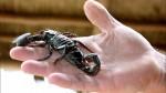 ¿Cómo desarrolló el escorpión su picadura mortal? - Noticias de shunyi zhu