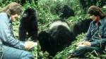 Dian Fossey: Google recuerda con doodle a defensora de gorilas - Noticias de dian fossey