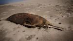 En una semana se sabrá por qué murieron 23 delfines en Sechura - Noticias de lobos marinos
