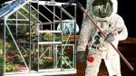 En el futuro…frutas con tatuajes y hologramas de chefs - Noticias de nigella lawson
