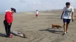 Delfines, lobos marinos y tortugas aparecen muertos en Pimentel - Noticias de lobos marinos
