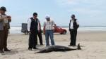 Imarpe cree que alga tóxica pudo causar la muerte de delfines - Noticias de lobos marinos