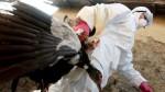 Una nueva cepa de gripe aviar causó una muerte en China - Noticias de gripe ah7n9