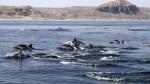 Conoce Los Órganos: la playa encantada de Piura - Noticias de lobos marinos