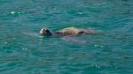 Implementarán ruta turística para observación de fauna marina - Noticias de fauna marina