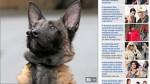 El perro con dos narices por fin consiguió dueño - Noticias de sandra lawton