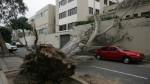 Caída de árboles: casos que generaron alarma en últimos años - Noticias de caida de arbol