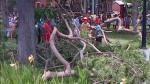 Caída de árbol en Parque Reducto pudo cobrar la vida de niña - Noticias de caida de arbol