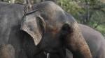 ¿Cuán inteligentes son los elefantes? - Noticias de perros calientes