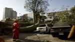 Caída de árboles: posibles causas y cuidados a tomar en cuenta - Noticias de caida de arbol