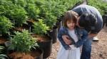 Una cepa de marihuana da esperanza a padres - Noticias de amy webb