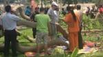 Herido por caída de árbol en Reducto aguarda por compensación - Noticias de caida de arbol