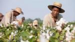 """La historia de """"12 años de esclavitud"""", la Mejor Película - Noticias de wilson pastor"""