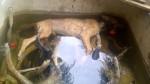 Los últimos y más indignantes casos de maltrato animal - Noticias de perro maltratado