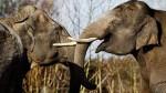 5 mitos sobre el sueño de los animales - Noticias de apareamiento