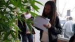 """ONU: Uruguay """"no generó tendencia"""" tras legalizar la marihuana - Noticias de jife"""