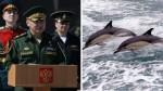 Los delfines militares de Crimea ahora son rusos - Noticias de lobos marinos