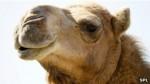 Detectan nuevo brote de síndrome respiratorio de Oriente Medio - Noticias de coronavirus