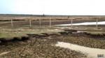 El llano colombiano que huele a animal muerto por la sequía - Noticias de dulce per��