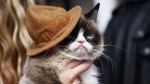 Grumpy Cat: de los memes a la entrega de los MTV Movie Awards - Noticias de mundialmente