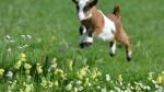 Con leche de una cabra clonada curarán una rara enfermedad - Noticias de enfermedad de gaucher