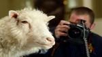 Clones como la oveja Dolly no podrán ser patentados - Noticias de ian campbell