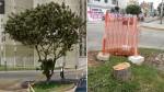 ¿Este árbol molestaba tanto para que lo talen? - Noticias de tala de árboles