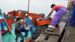 Produce decomisa 3 toneladas de pota y las dona en Chimbote - Noticias de pueblos jovenes