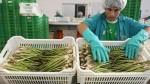 ¿Cuánto afectaría el fenómeno de El Niño a una firma agrícola? - Noticias de paises bajo
