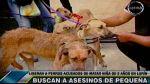 Cuatro perros acusados de matar a niña fueron liberados - Noticias de perro maltratado